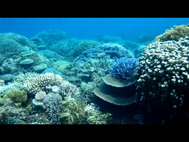 Best Snorkeling Australia Great Barrier Reef