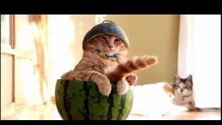 Прикольный кот (Озвучка)