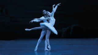 Swan Lake | Svetlana Zakharova & Denis Rodkin | Bolshoi Ballet 2015 (DVD/Blu-ray Highlight)