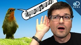 Where Did Music Come From?
