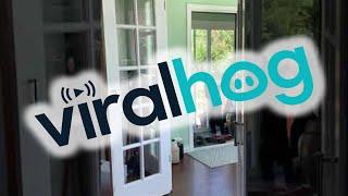 Black Bear Cubs Break Into Family Home || ViralHog