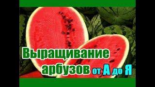 Выращивание арбузов от А до Я / Все о бахче в одном видео