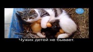 Прикольные котики и другие животные.