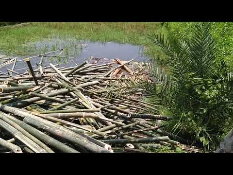 Primitive Technology: Bamboo Cutting & Bamboo Using for Making Supporter Stand for Tree