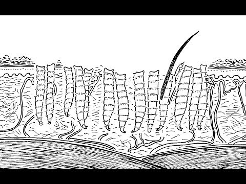 Nézni anime parazita 2