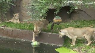 Лучшие видео недели о животных от Рейтер