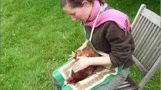 respectful chicken harvest part 1 of 2 kill and pluck - how to