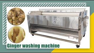 Brush peeling washing machine Stainless Steel Fruit washing machine youtube video