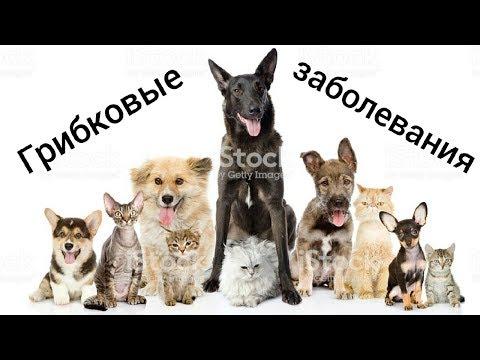 Грибковые заболевания//ДИАГНОСТИКА/ЛЕЧЕНИЕ