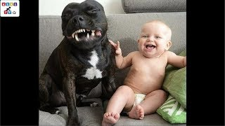 The dog\'s reaction to the baby for the first time