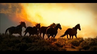 Alicia Keys ft. Adam Levine ∼ Unplugged ∼ Wild Horses