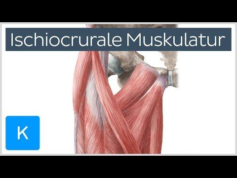 Heimtrainer in Osteochondrose der Halswirbelsäule