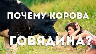Почему мясо коровы называется говядина? В.Сундаков