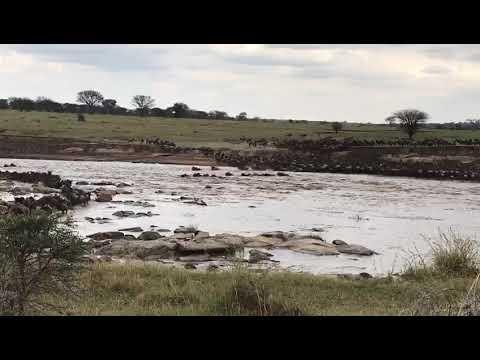 Migration Crossing Mara River