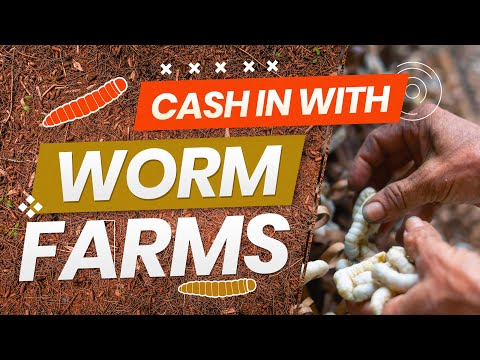 , title : '$360K Selling Worms? | How To Cash In With Worm Farms