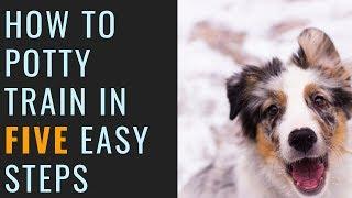 Australian Shepherd Potty Training with Nash (5 Steps to Potty Train Your New Puppy)