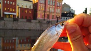 Где находится хорошая рыбалка в харькове