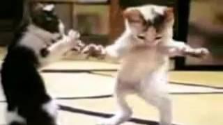 En komik kediler