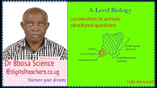 Locomotion in animals structured revision questions