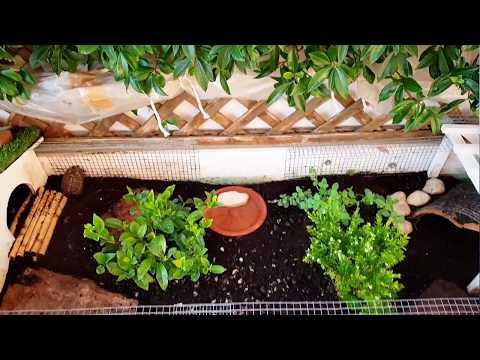 Terrario per tartarughe di terra 2.0!    (aggiornamento dal primo video)