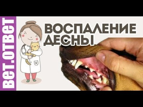Как лечить воспаление десен у собак? КОНКУРС!