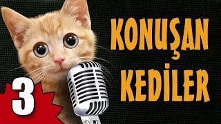 Konuşan Kediler 3   En Komik Kedi Videoları