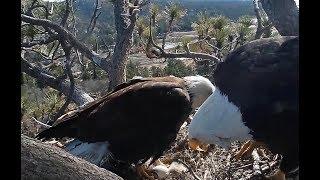4-14-19  Big Bear Eagles ~ Jackie Finally Sees Her Precious  Baby! ❤