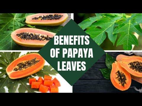 Amazing Benefits Of Papaya Leaves 🍂