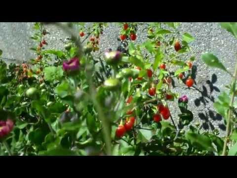 Abot-kayang pagbaba ng timbang herbs