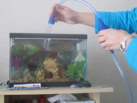 How to properly water change a betta fish tank yahoo for Betta fish water change