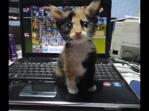 Очень забавные кошки, сборник №2 смешных видео про котов и животных 2015 года