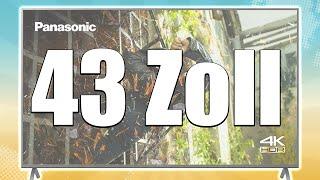 Bester 43 Zoll Fernseher 2021   Top 3 im Vergleich