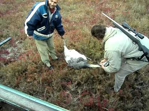 mark sullivan cazando un avestruz!!!
