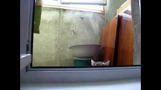 трусливый кот240