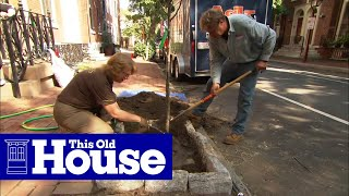 How to Plant a City Street Tree - This Old House