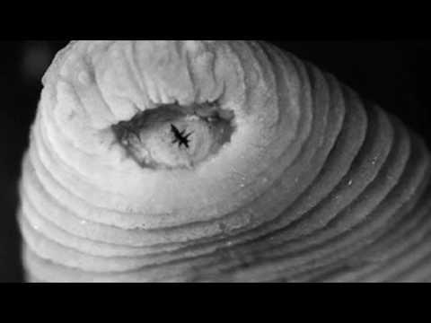 ครัสโนดาร์ Flebological คลินิก