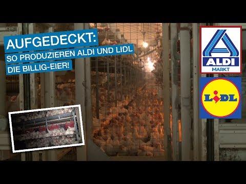 Augen auf vor Billig-Eiern bei Lidl, Aldi & Co.!