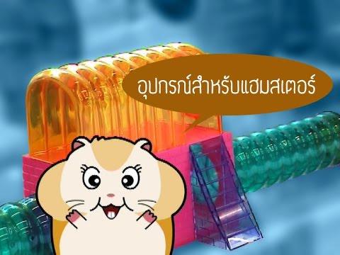 Giardia ในการรักษาตับอ่อน