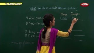 CBSE Class 2 Science : World Of Plants   Class 2 Science CBSE School Syllabus Videos   NCERT