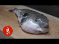 Download Youtube: High-Stakes Dining: Dare to Taste the Poison Puffer Fish?