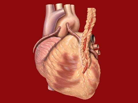 Si ndikimet adrenalin në presionin e gjakut