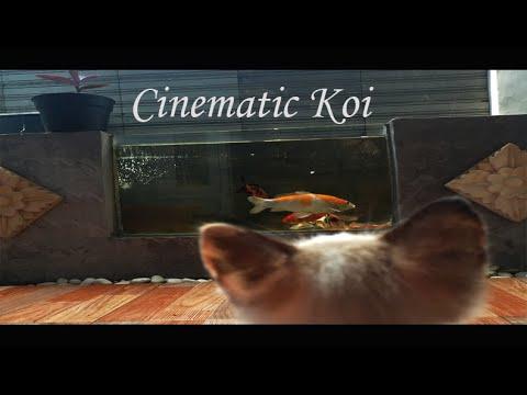 Cinematic kolam ikan kaca depan
