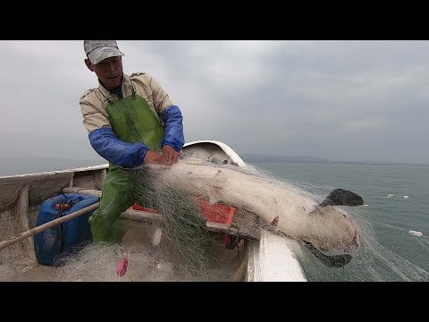 阿雄外海遇到大鲨鱼,目测有100多斤,十几年的渔民没见过这么大