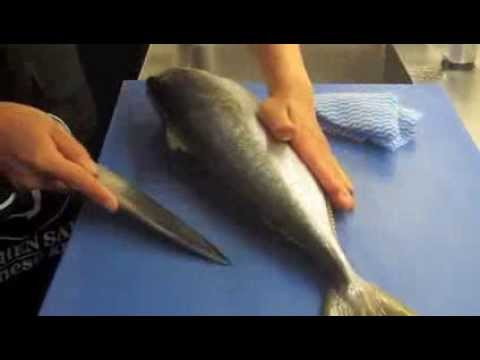 How to fillet Kingfish with Deba knife