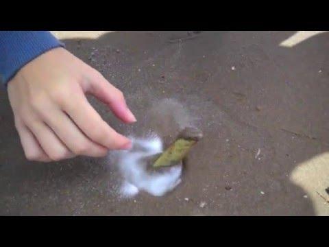 De-worming bata priparaty