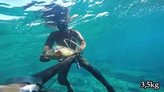 Croatia spearfishing Summer 2018