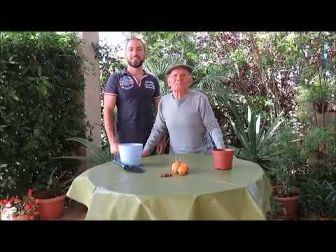Ecografia della prostata e della vescica
