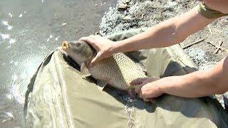 Рыбалка в усть лабинский район краснодарского края