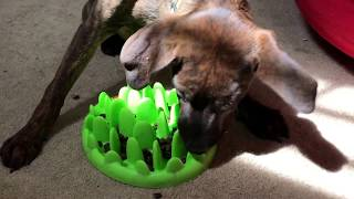 Northmate interactive feeder. My dog Barry used to go crazy fast & choke on his food. Not anymore:)