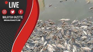 MGTV LIVE : Insiden Ratusan Ikan Terapung dan Mati di Sungai Damansara